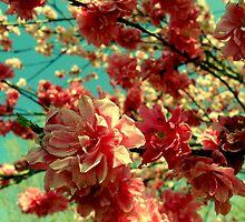Spring in Bloom by Dawn di Donato