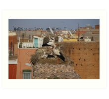Storks on the palace walls, Marrakech Art Print