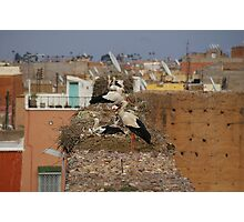 Storks on the palace walls, Marrakech Photographic Print