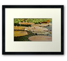 Lilypads On The Water Framed Print
