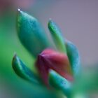 succulent bud by paul erwin