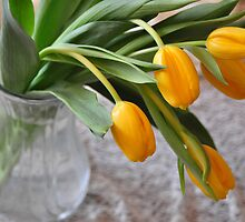 Yellow tulips by mltrue