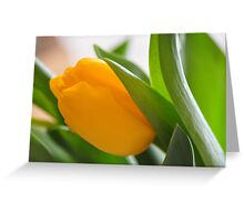 Single yellow tulip bloom Greeting Card
