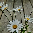 Ahh Summer Daisies by Roxane Bay