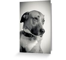 Humphrey Dogart, Rising Star Greeting Card