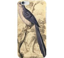 Vintage Bird Colcandy Fly  Iphone Case iPhone Case/Skin