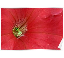 Petunia Red Poster