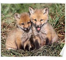 Laughing At The Photographer / Fox Kits Poster