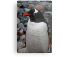 Gentoo penguin Metal Print