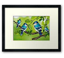 Blue jays (3560 views) Framed Print