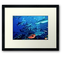 Frenzy2 Framed Print