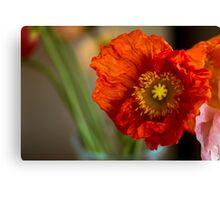 Macro Poppy flower print Canvas Print