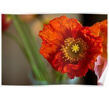 Macro Poppy flower print Poster