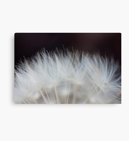 Dandelion Fluff Canvas Print