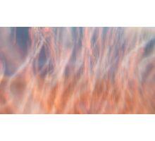 PinkBubbles Photographic Print