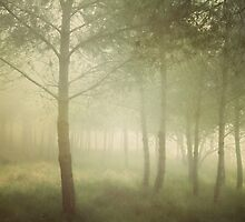 young pines in the sea mist by paulgrand