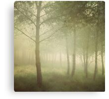 young pines in the sea mist Canvas Print