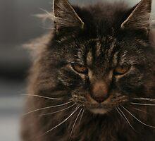 Tucker by MAshleyPhoto