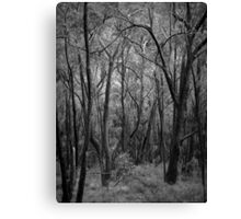 Scary Trees- Wine Shanty Track South Canvas Print