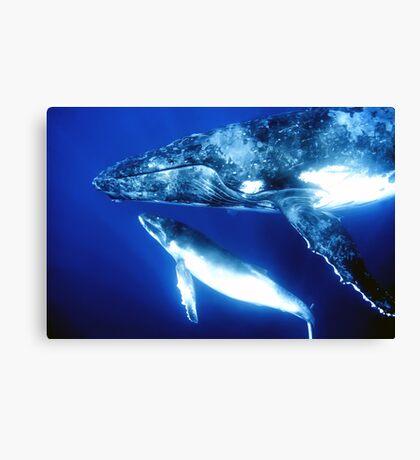 Humpback whales Canvas Print