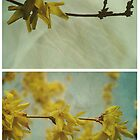 Spring - Forsythia by Sybille Sterk