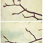Spring - Plum Tree by Sybille Sterk