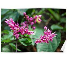 Flower Pink Plumeria Poster
