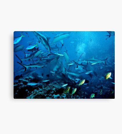Shark Feed at North Horn, Coral Sea Canvas Print