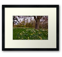 Spring in the Woods - Constable Burton. Framed Print