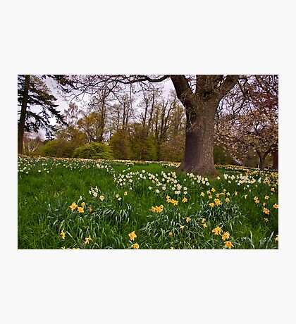 Spring in the Woods - Constable Burton. Photographic Print