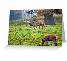 Red Deer Does Greeting Card