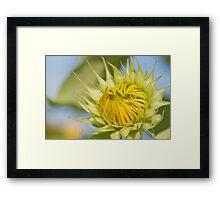 Macro shot of Sunflower bud Framed Print