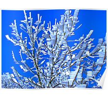 Snowflaks kling to twigs behind their wind-shadow Poster