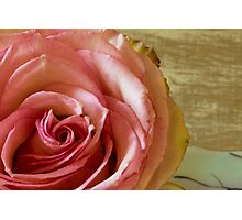 Pink macro columbian rose print Photographic Print