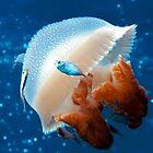 Mosaic Jellyfish by Melissa Fiene
