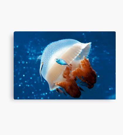 Mosaic Jellyfish Canvas Print