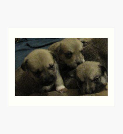 three of jerzy's pups Art Print
