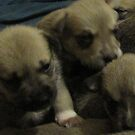 three of jerzy's pups by gabbielizzie