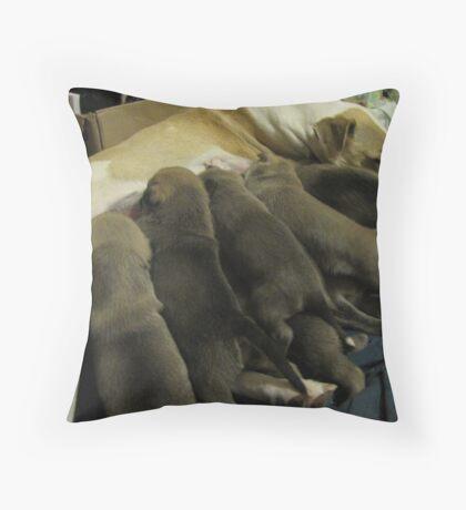 jerzy's herd Throw Pillow