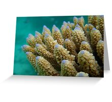 Gardens Below – Diving in the Seychelles Greeting Card