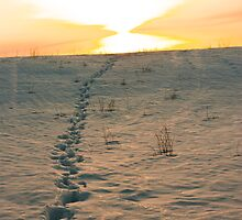 Deer Tracks in The Snow by Jamie Cameron