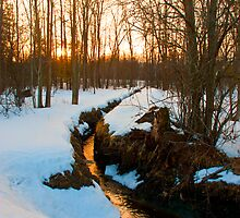 Winter Stream by Jamie Cameron