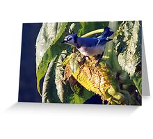 Blue in Sun Greeting Card