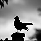 Silhouette by Phil Hammond