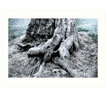 Tree base Art Print