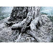 Tree base Photographic Print