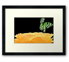 butterfly and rose Framed Print