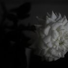 White and Grey Flower - Macro by Guilherme Milner