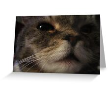 Furry Face Greeting Card