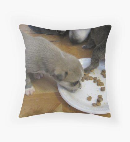jerzy's puppies Throw Pillow